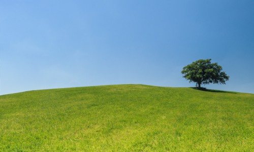 Lonely-tree-on-hill-license-free-CC0-980x650